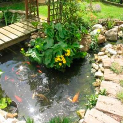 construcciones-de-piscinas-naturalizadas-madrid-02